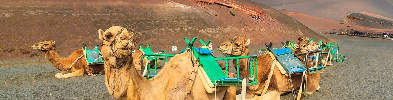 Escursione con cammelli a Lanzarote nel Parco Timanfaya, Centauro Rent a Car